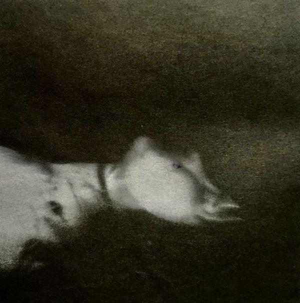图片45.jpg